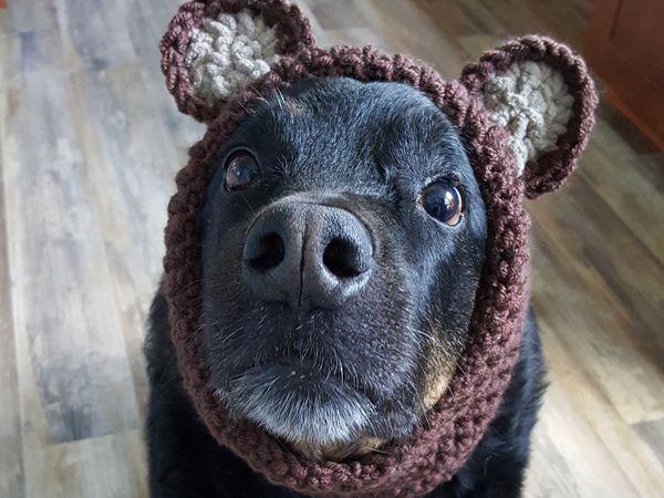 Crochet Doggie Snood Pattern