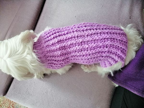 crochet Lilly Winter Puppy Sweater pattern