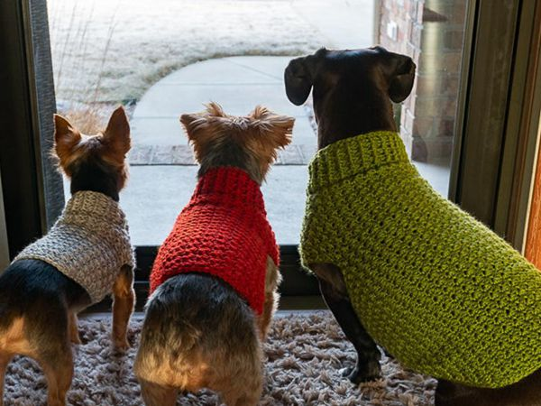 crochet The Stylish Dog Sweater easy pattern