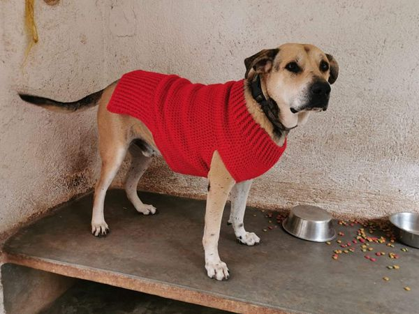 Crochet Dog Sweater easy pattern