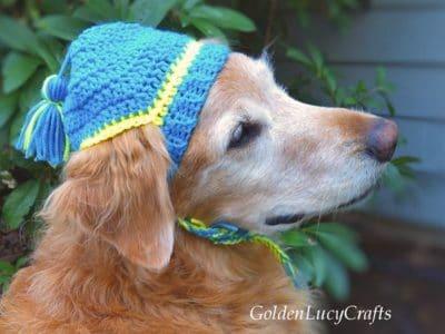 crochet Dog Hat free pattern