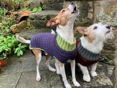crochet Bespoke Doggie Jumper free pattern